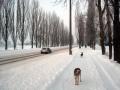 Улица Лепешинского, фото jusik404