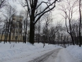 Аллеи парка Гомельского дворцово-паркового ансамбля, декабрь 2012, фото agiss