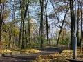 Аллеи парка Гомельского дворцово-паркового ансамбля, октябрь 2002