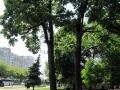 skver-shevchenko006