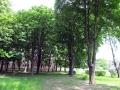 skver-shevchenko008
