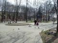 skver-shevchenko013