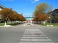 Площадь Восстания. Фото Адаменко.