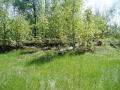 vylevo-2008-foto-putkova-6