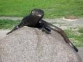 Скульптура «Ящерица на камне», фото prp