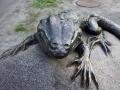 Скульптура «Ящерица на камне» в Гомеле