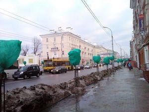 Центр Гомеля «озеленили» на зиму