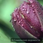 Фотовыставка изображений цветов откроется в Гомеле