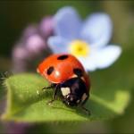 fotovystavka-izobrazhenij-cvetov02