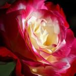 fotovystavka-izobrazhenij-cvetov03