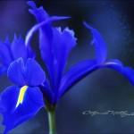fotovystavka-izobrazhenij-cvetov04