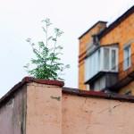 sady-na-kryshax-domov-v-gomel09