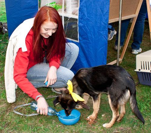 Более двухсот человек поддержали идею строительства в Гомеле приюта для бездомных животных