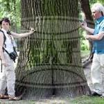 Перепись парковых насаждений проходит в Гомельском парке