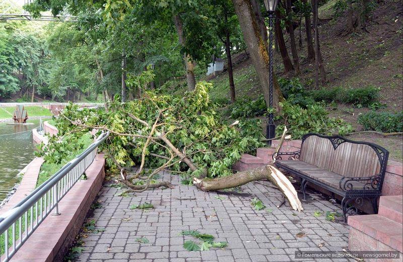 Последствия урагана в Гомеле