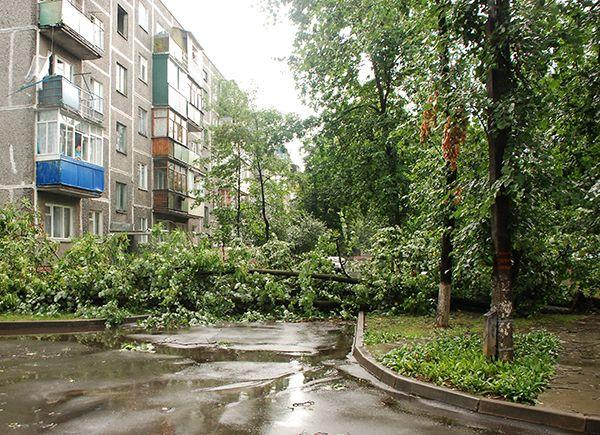 В Советском районе ураган повалил 53 дерева