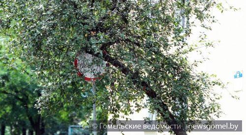 Из-за дерева не видно дорожного знака