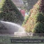 Как озеленители города спасают цветы и деревья от жары?
