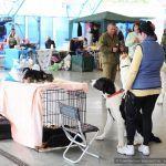 Республиканская выставка всех пород собак прошла в Гомеле
