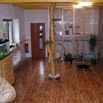 Гостиница для собак и кошек появилась в Гомеле