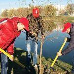 Участники акции «Спасём, сохраним, создадим» посадили деревья