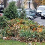 Гомель, в котором мы: городские цветы осенью