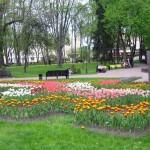 Тысячи цветов украсят клумбы в Гомеле
