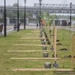 На Аллее Памяти Гомельского дворцово-паркового ансамбля посадили деревья