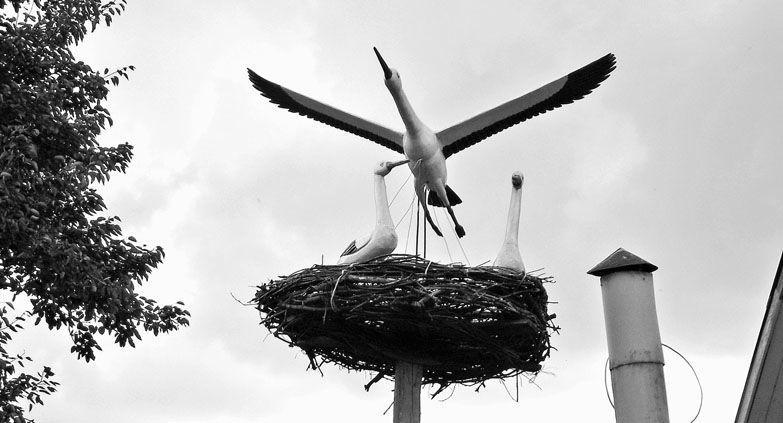 Летят над Уткина аисты...