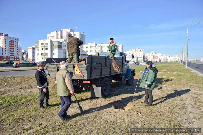 В Гомеле проходит осенний месячник по благоустройству и озеленению города