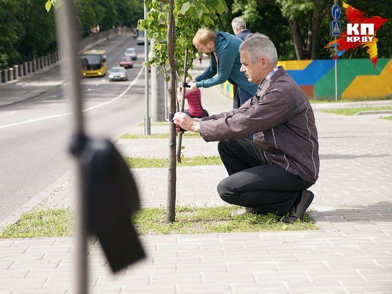 Черные ленточки в Гомеле повязали на деревья, которые хотят уничтожить