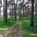 kosmicheskij-les-v-gomele-snova-rubyat13