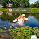 v-gomele-iskali-pokemonov-a5