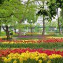 Экзотические цветы появятся на клумбах Гомеля в 2017 году