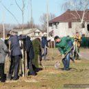 50 клёнов высадили на улице Чечерской в Гомеле