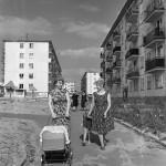 В новом микрорайоне «Фестивальный» 18 сентября 1963