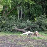 posledstviya-uragana-v-gomele03