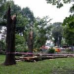 posledstviya-uragana-v-gomele07