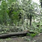 posledstviya-uragana-v-gomele12