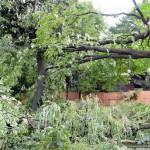 posledstviya-uragana-v-gomele17