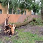 posledstviya-uragana-v-gomele18