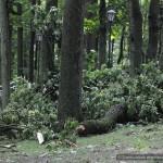posledstviya-uragana-v-gomele32