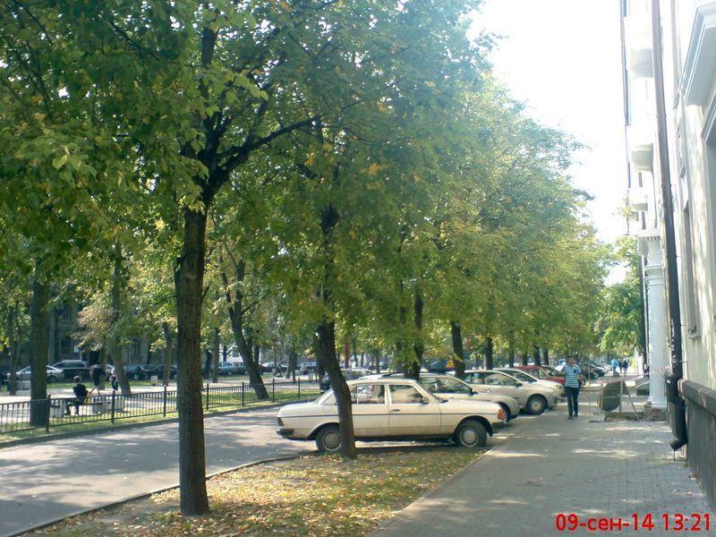 zelenogo-druga-stanovitsya11
