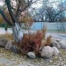 Жители одного из домов разбили сад камней для себя и соседей.