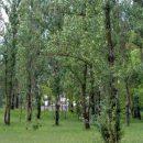 kosmicheskij-les-v-gomele-snova-rubyat15